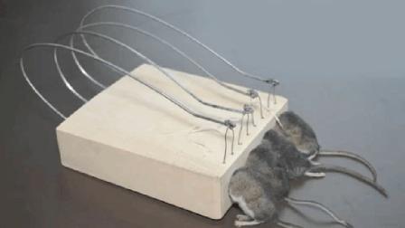民间牛人自制的捕鼠神器, 老鼠一抓一个准, 制作成本不到10块钱