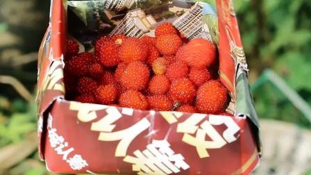 覆盆子果酱的做法, 小时候都吃过的果子, 做出天然的美味