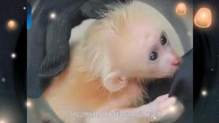 可爱的萌猴, 没想到是一级保护动物
