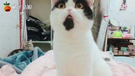 这就是养猫人每晚睡前的生活, 你喜欢这样吗?