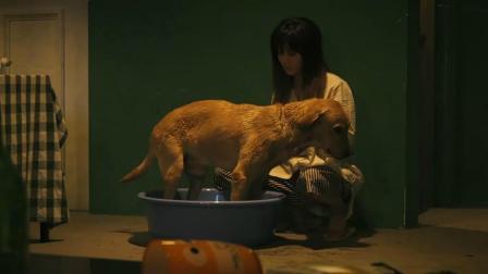 女孩捡了一只流浪狗, 结果发现他是一个大帅哥! 一部奇幻爱情电影