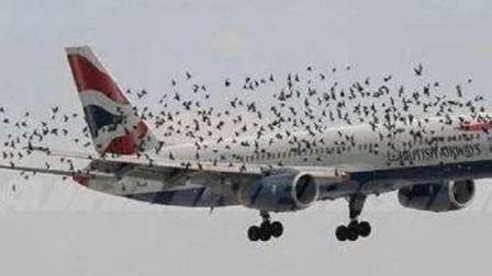 """小鸟这么小, 为什么与飞机相撞, 会导致""""机毁人亡""""的危险? 看完长知识"""