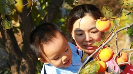 柿子树之恋18.10.28
