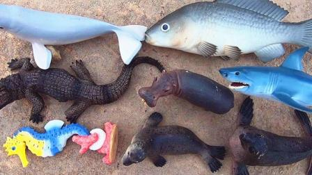 认识河马等8种海洋动物