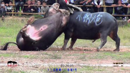 归江斗牛 上集(2018年农历8月25)