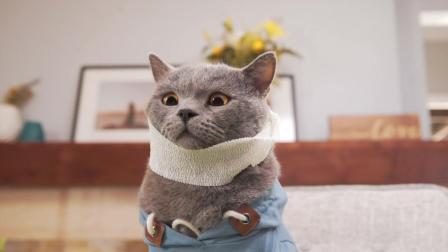 奴才生病了, 猫主子一天该怎么办呢?