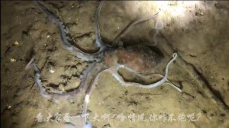 小倪赶海篇: 遇见一只八爪鱼小倪用手抓起来, 原来是只不动的八爪