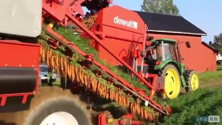 收胡萝卜! 先进的农业机械, 一天能收十亩地!