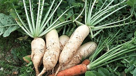 白萝卜加它一起煮, 不仅好喝, 还快速治愈鼻塞流涕, 咳嗽有痰!