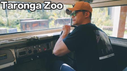 悉尼不推荐的景点—Taronga Zoo 动物园VLOG² 298