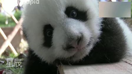 有没有懂熊猫语的小伙伴? 在线等, 挺急的!