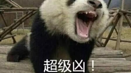 靠卖萌生存的大熊猫, 发起怒来就连狮子老虎也不敢去攻击它