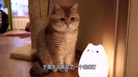 主人害怕大脸猫孤独, 给喵星人买了一个喵咪灯, 太可爱了!