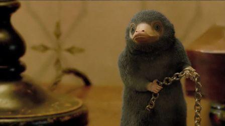 【猴姆独家】精彩至极!《神奇动物2:格林德沃之罪》曝光日本预告片!