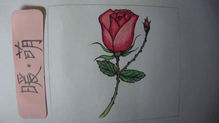 亲子儿童彩铅涂色简笔画/手账素材-玫瑰