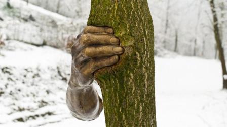 """世界最""""孤独""""的手, 握着一棵树50年从未松手, 到底怎么回事?"""