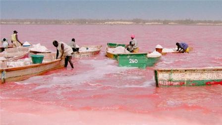世界上最浪漫湖泊, 湖水呈粉红色, 深度1米却危险重重!