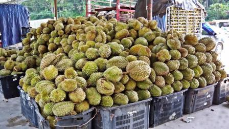 泰国榴莲卖不出去, 背后真相让人想笑, 中国吃货看了一脸懵!