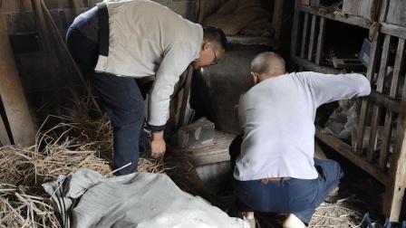 在没有冰箱的年代, 农村人是怎么保存红薯的? 一个冬天都不会坏