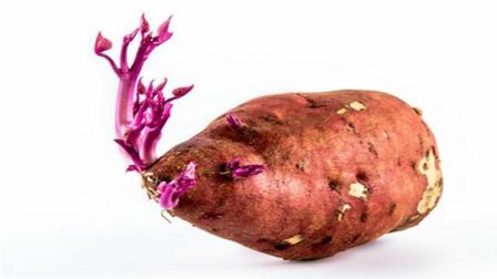 你家有没有发芽的红薯? 要是早点知道就好了, 谁见了都喜欢, 实用