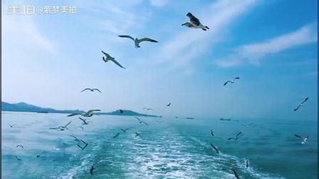 长岛风景区的万鸟岛是海鸥的世界, 岛上栖息数万只鸥鸟