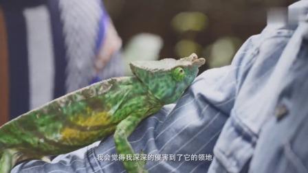 小匹告诉你:变色龙也有属于自己的领地,小动物也是要尊重的!