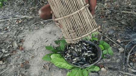 大叔用竹子编原始捕鱼笼, 几小时后收获一大堆, 直接生火烤着吃!