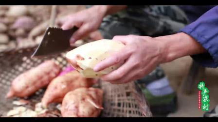 农村纯手工制作的绿色食品红薯干, 制作却如此简单