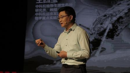 王四宝: 为了阻断疟疾传播, 我们要把蚊子赶尽杀绝吗?