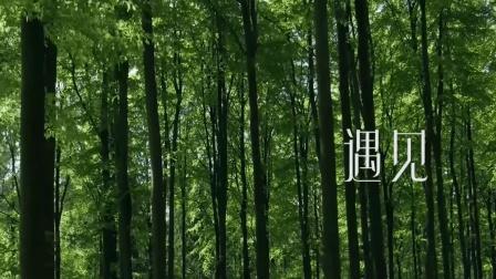 千树繁花 众里寻他 受众黑茶