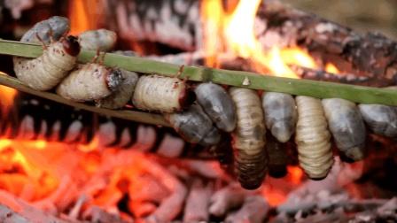 女孩在野外抓到几只肉土蚕, 直接将它用竹竿夹着烤来吃, 真是高蛋白