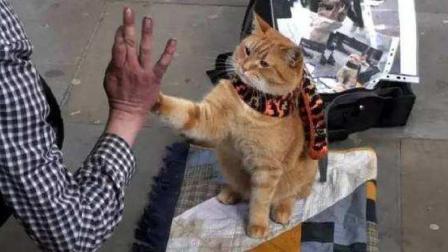 《流浪猫鲍勃》超感人 流浪歌手和流浪猫超级组合 走向人生巅峰!