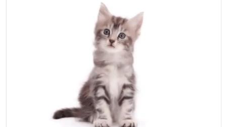 """【超萌】小奶猫怎么茁壮成长为一只""""成熟""""喵星人的呢!"""