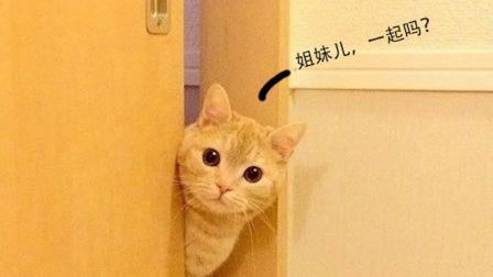 为什么主人上厕所时, 猫要在旁边偷看?
