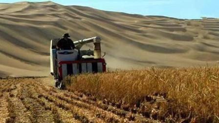 袁隆平再创奇迹, 这种水稻能把沙漠变良田, 在迪拜率先使用!
