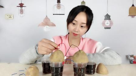 """妹子试玩""""科学小实验"""", 自制土豆电池, 土豆也能点亮灯泡吗?"""