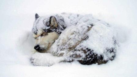 流浪动物在严冬将死2000W!省一瓶可乐就能帮他们活下去