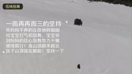 """催人泪下! """"熊出没""""现实版, 熊宝宝和熊妈妈是这样爬到山顶。感动!"""