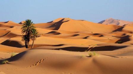 如果地球的沙漠全部变成森林, 世界将会有什么影响? 看完头皮发麻
