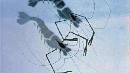 【国产动画】《小蝌蚪找妈妈》原版