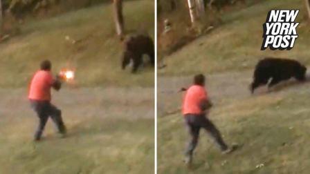 加拿大 一头棕熊发疯似地冲向一户人家 男主人拿出散弹枪应对