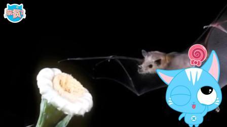玩疯了方大手不吃鱼 不吃鱼的蝙蝠大家庭