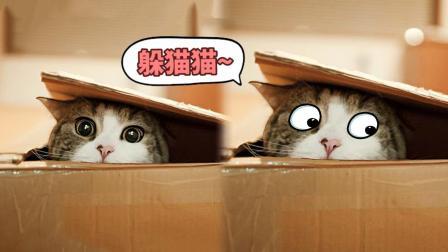 喵星人告诉你,捉迷藏为什么叫躲猫猫!
