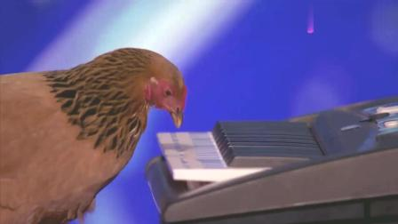 美国达人秀美女带来的小鸡在键盘上弹奏爱国歌曲