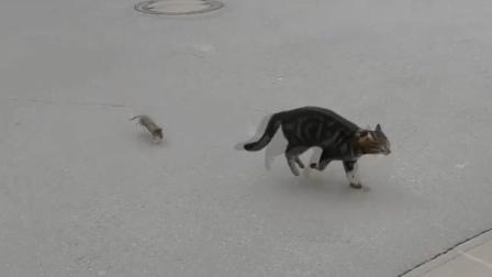现实版《猫和老鼠》?