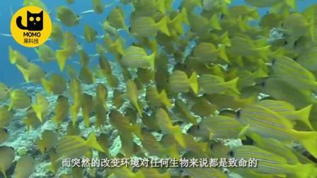 如果把淡水鱼扔进大海, 会发生什么奇怪事情? 说出来别不相信