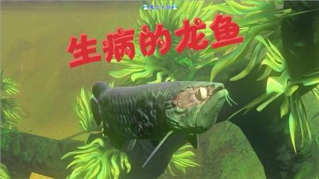 天铭 海底大猎杀 180 龙鱼 变形记