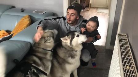 爸爸抱着宝宝和哈士奇玩, 宝宝的反应让妈妈乐坏了