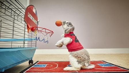 一只兔子一夜成名, 只因投篮太厉害, 网友: 比我还厉害?