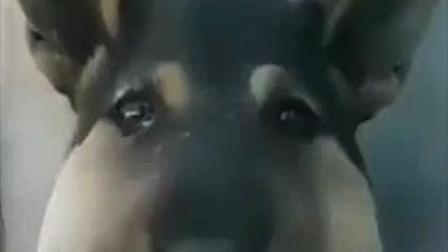 捅马蜂窝的狗子我看过, 你这样的我还是第一次见